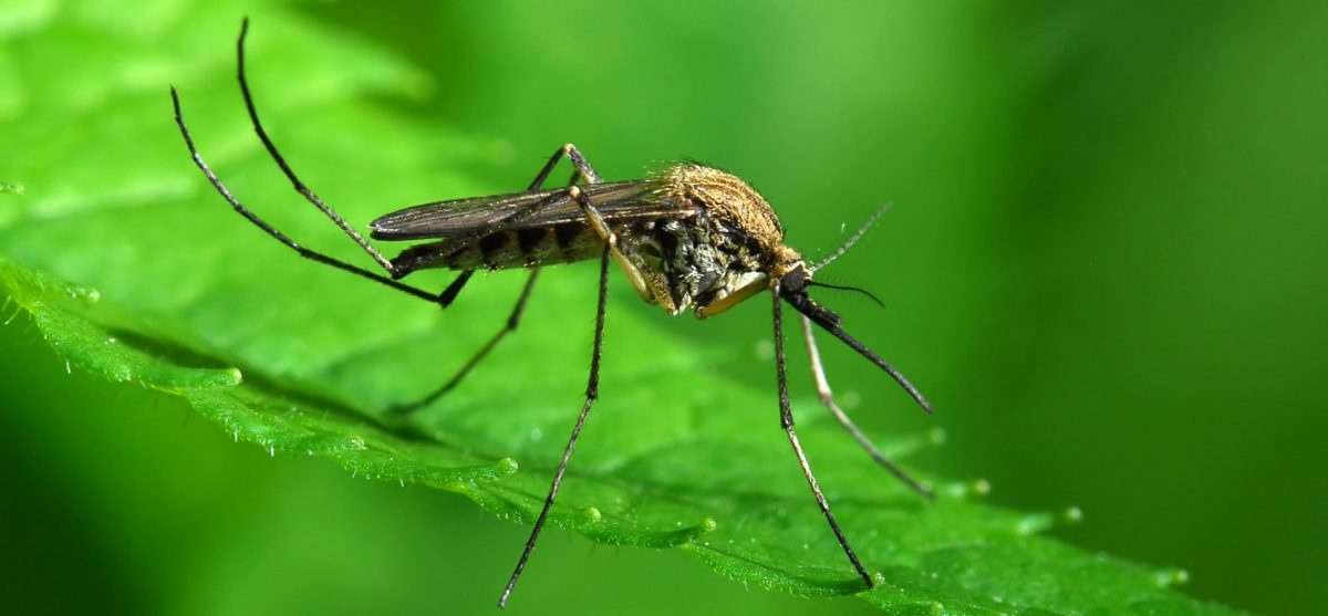 How The Wet Weather Affects Mosquitoes