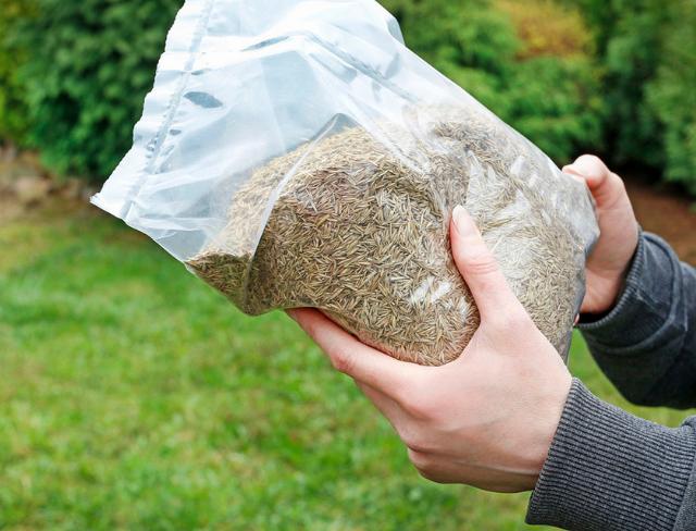 bag of seed 600x300