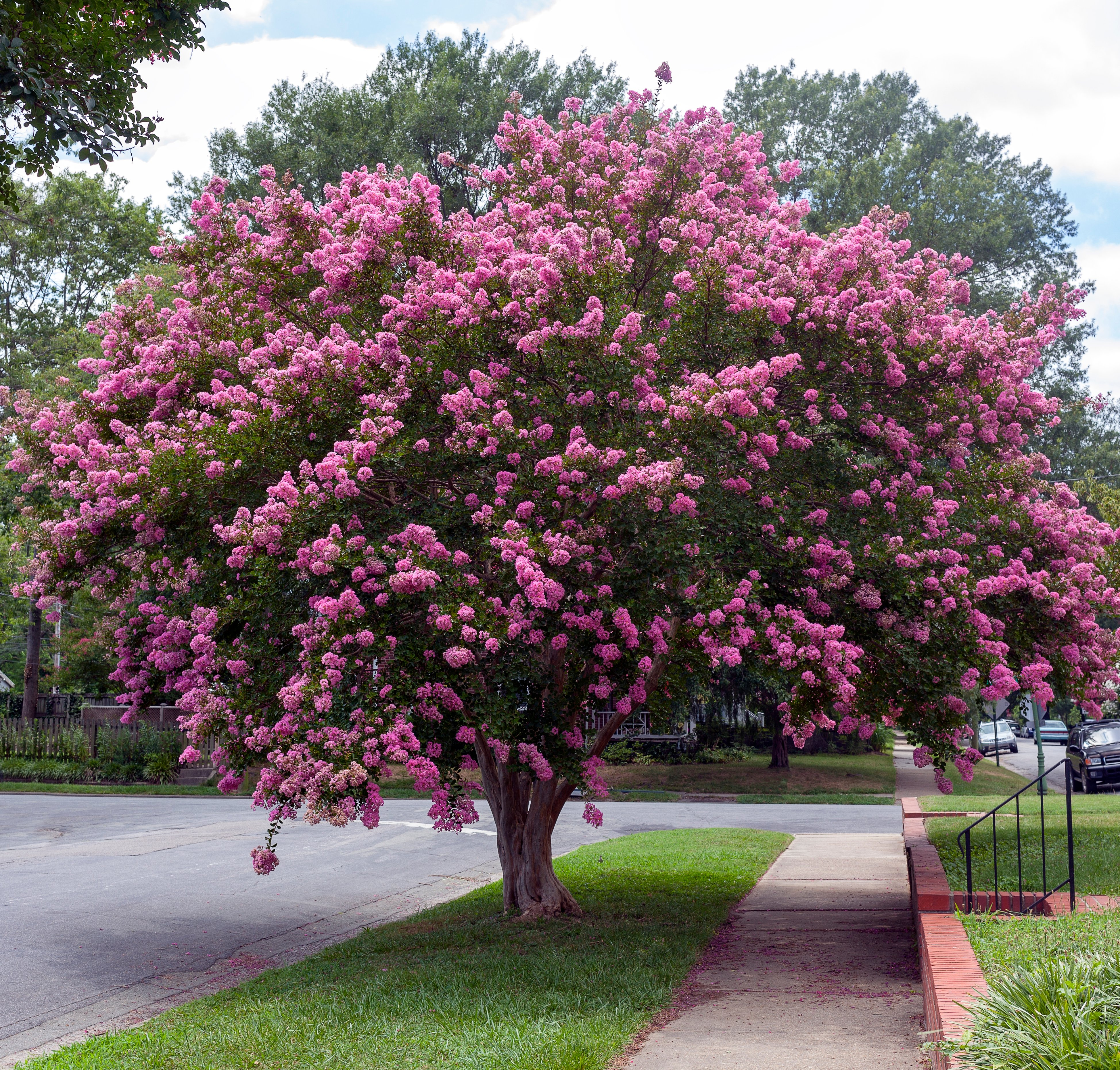 Keeping Your Trees Healthy All Year Round