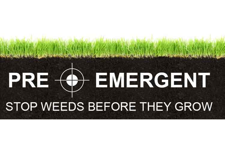 What is a Pre-Emergent…Anyway?