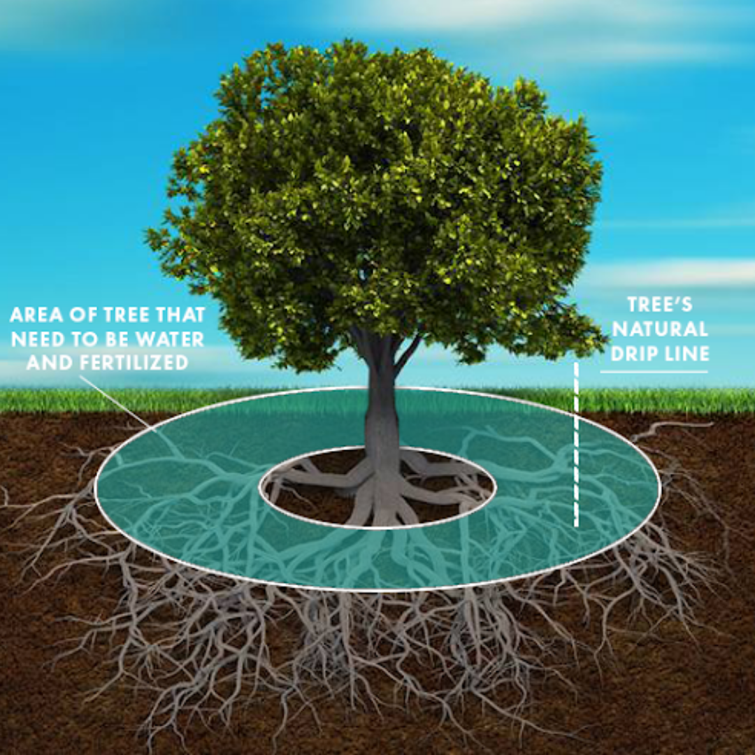 1-DEEP ROOT FERTILIZATION
