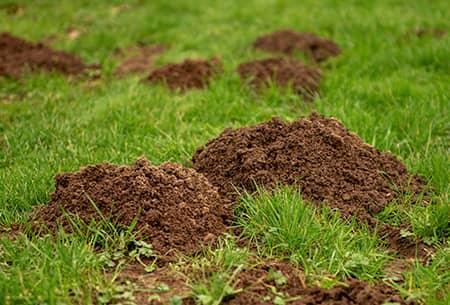 mole mounds