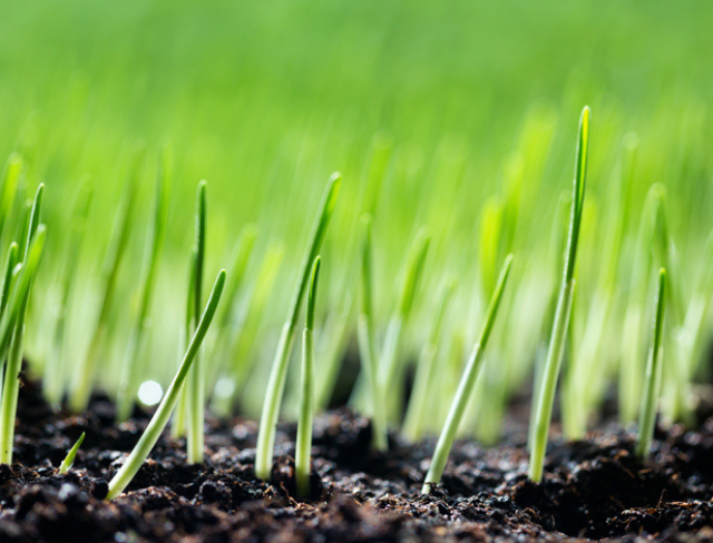 Aeration & Seeding Aftercare