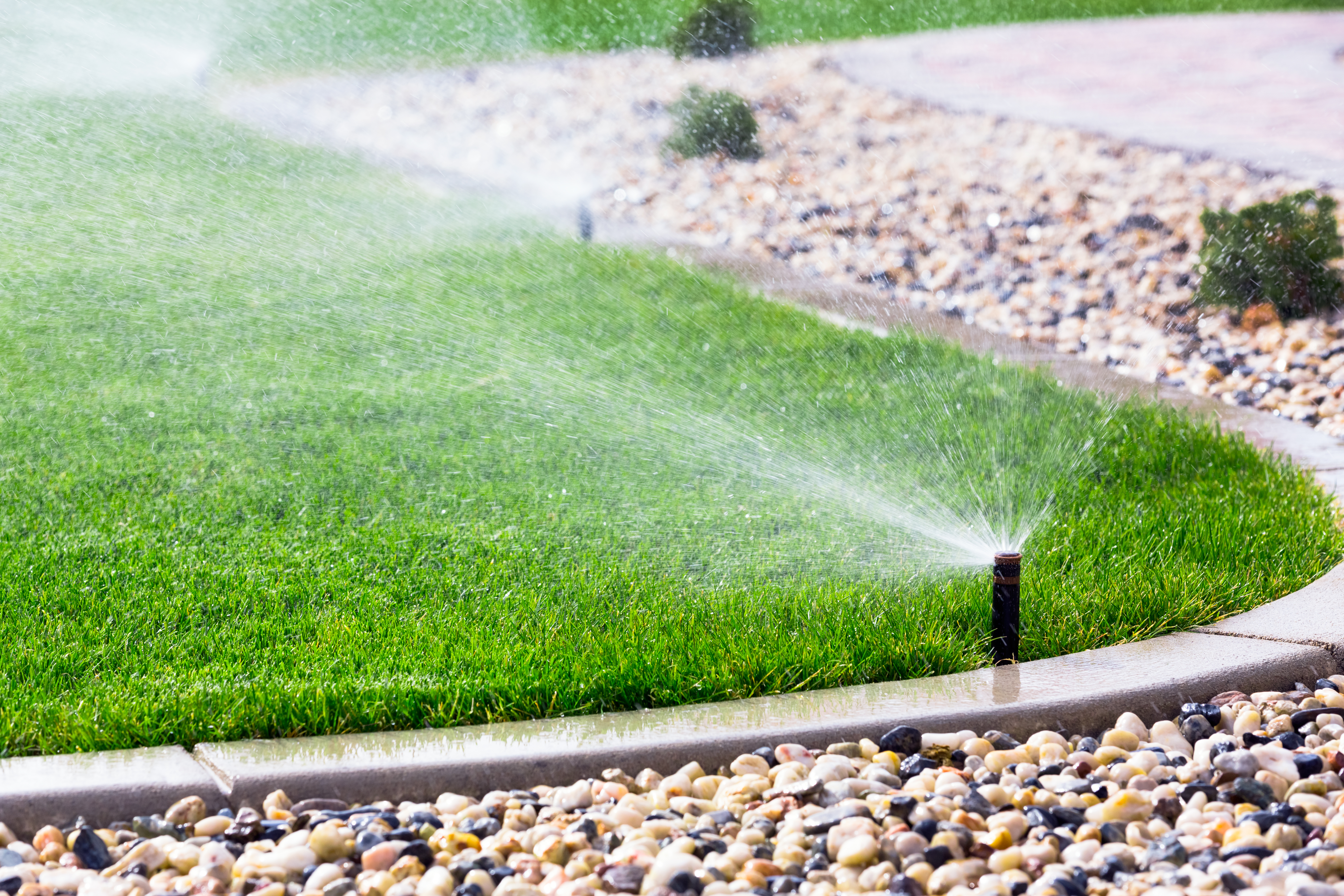 How much should you water your lawn?